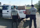 Binomios caninos localizan 28 kilos de marihuana